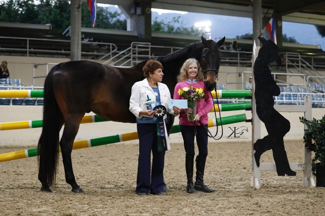 High Score Thoroughbred Jumper Champion  Prestige
